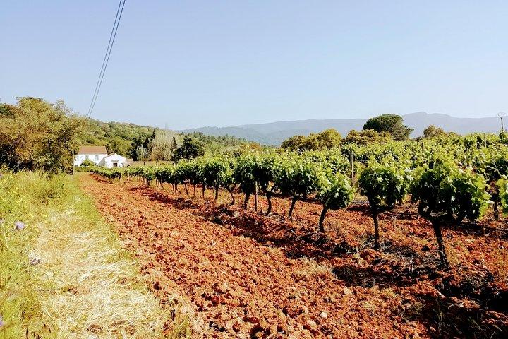 Lisbon Surf & Wine 5