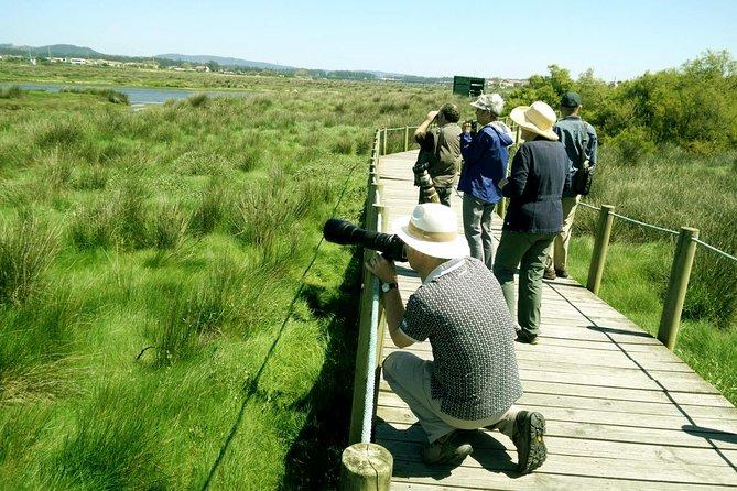 Birdwatching from Porto