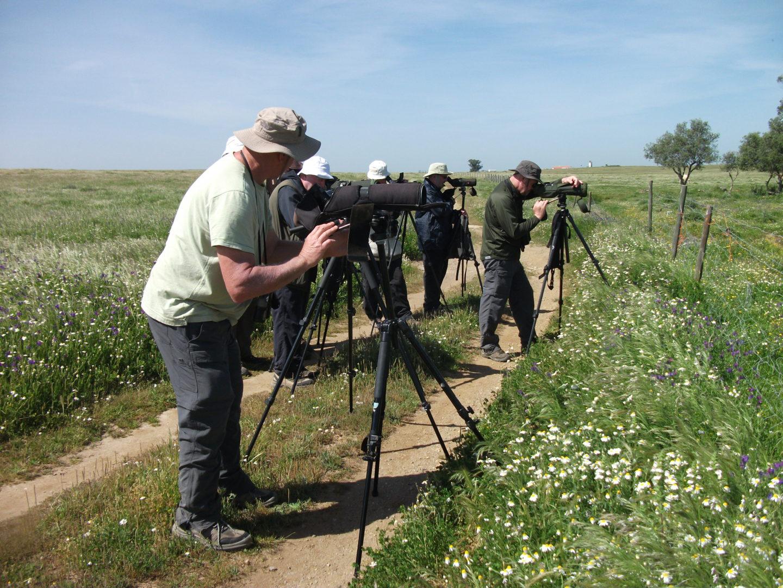 Birdwatching 7