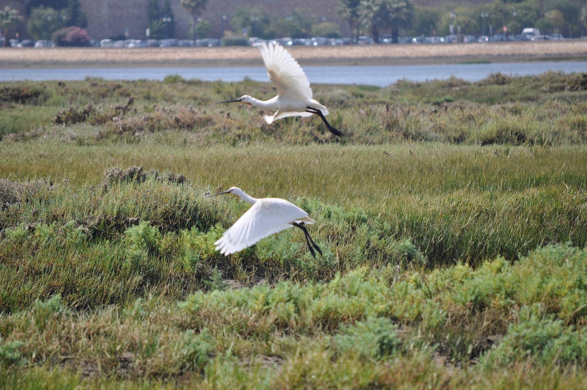 Birdwatching Boat Tour 4