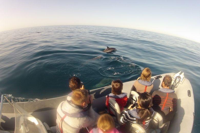 Dolphin Tour 2