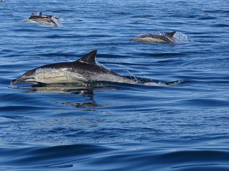 Dolphin Tour 3