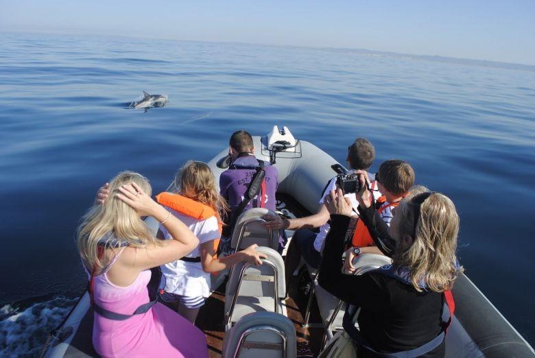 Dolphin Tour 4