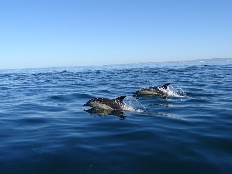 Dolphin Tour 6