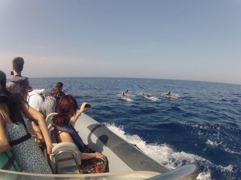 Dolphin Tour 7